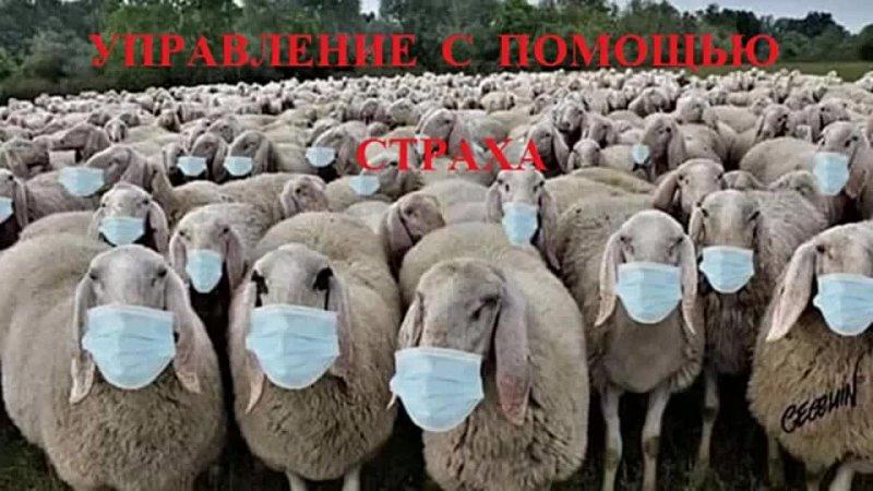 Сергей Ссаль о Адренохроме