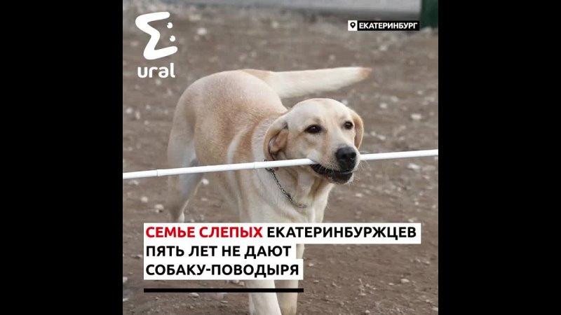 Семье слепых екатеринбуржцев не могут дать собаку-поводыря