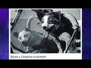 """Познавательное видео """"Четвероногие космонавты"""""""