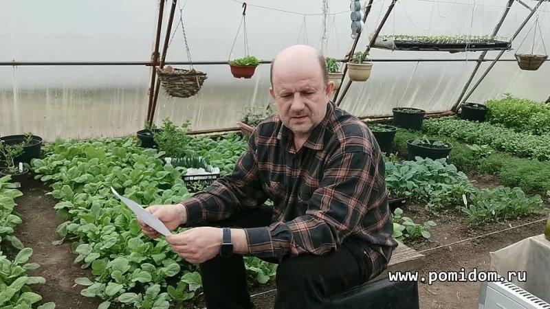 Дом Помидоров Помидом ру Как в деревнях растили свои семена огурцов Как вырастить свои семена капусты Свои семена лука