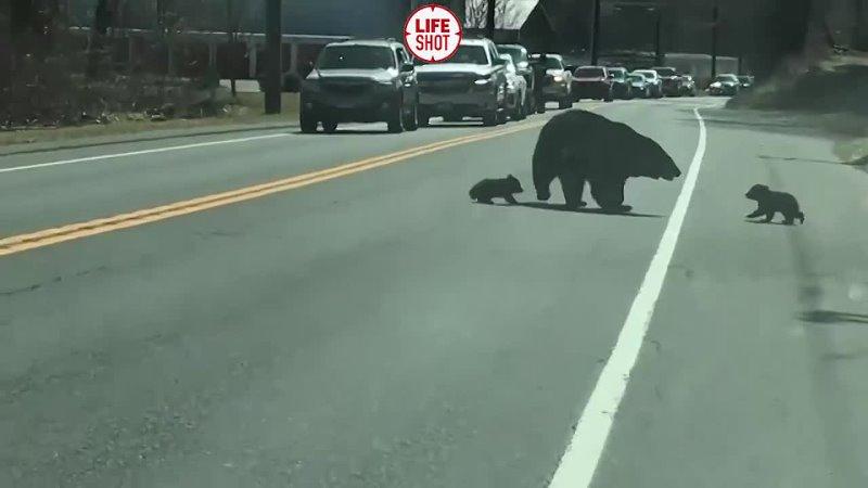 🐻 Непослушные медвежата