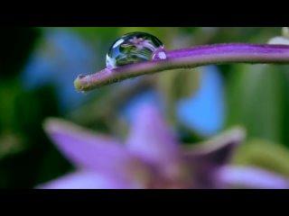 Как распускаются цветы таймлепс. Шикарно! Flowers in growth time lapse (1)