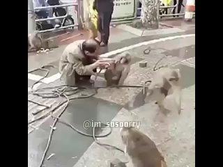 животные умнее людей.mp4