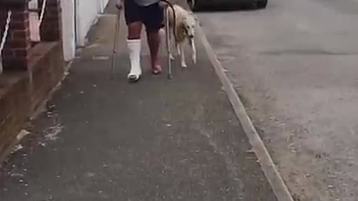 Собака подражает хозяину из-за сочувствия к нему