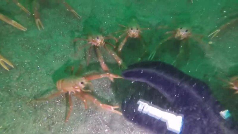 TF2 Spy Crabs Investigating Hand irl