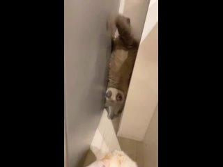 Вызывайте экзорцистов, кот на стену полез