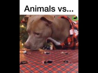 животные делают смешные вещи (2)