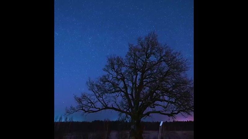 Александр Дрозденко показал красоту Ириновского дуба на фоне усыпанного звездами неба