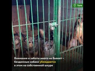 """Волонтеры навестили бездомных собак в одном из самых крупных приютов Тулы - """"Любимец"""""""