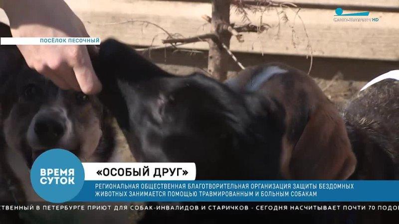 Сюжет Время суток телеканал Санкт Петербург об Особых Друзьях 🐶