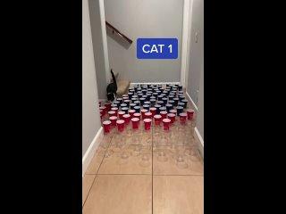 Есть три вида котов