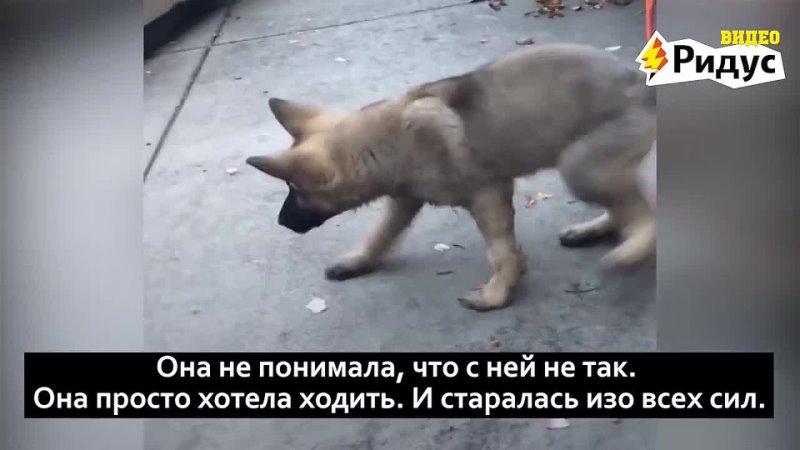 Невероятная история собаки которую хотели усыпить Н