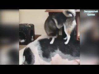 Немного юмора,Свинья и собака.wmv