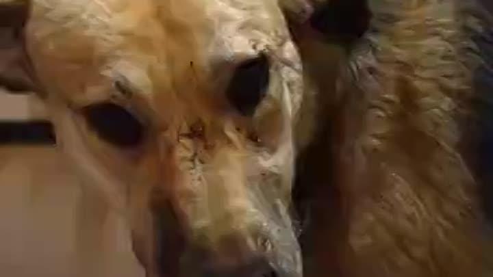 Видео от Екатерины Барабановой