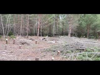 Спил деревьев под строительство 89824959200 Александр Посохин