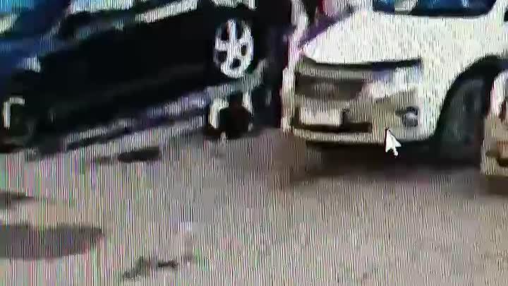 Собака напала на ребенка в Красноярске и укусила его за лицо