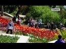 Никитский ботсад в майские принимает сотни посетителей