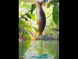 Ничего необычного. Просто рыба ест ягоды.