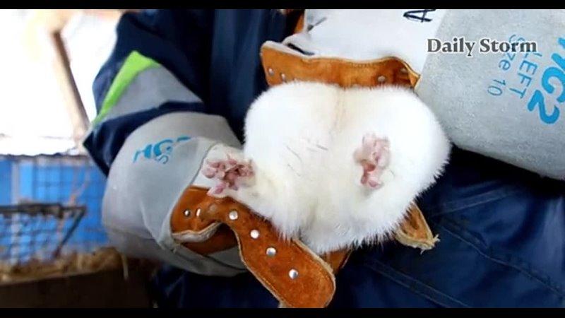 Первая в мире вакцина против коронавируса для животных «Карнивак-Ков» зарегистрирована в России