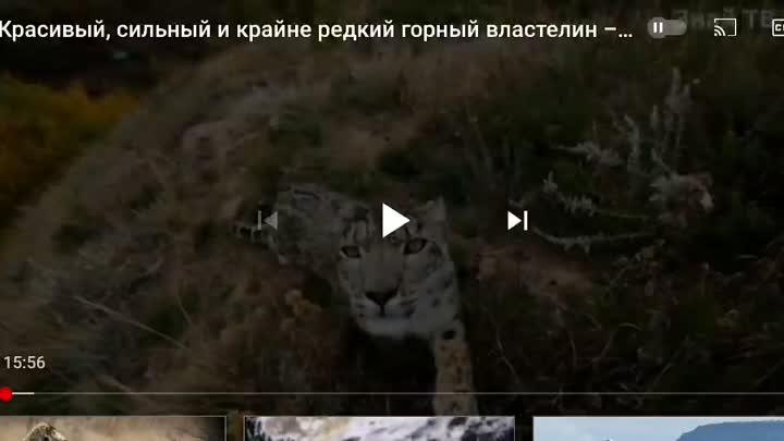 Screen_Recording_20210618-005318_YouTube.mp4