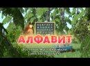 Маша и Медведь. Песенки для малышей. 6 серия Алфавит