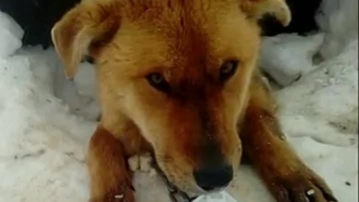 Видео от Лейлы Коноваловой