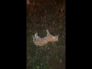 Стая собак в Ставрополе не даёт жить людям и животным