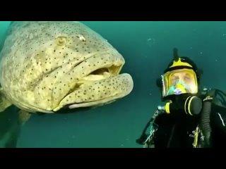 Даже не ждите, что она цапнет аквалангиста