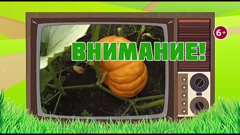 Видео от ТелеРадиоКомпания Тивиком