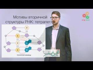 008  Биологические макромолекулы. Структура и динамика РНК