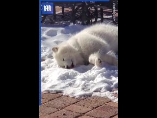 этот собакен просто любит валяться в снегу