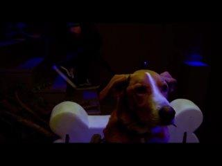 Пёс под прикрытием / Agent Toby Barks (дублированный трейлер / премьера РФ: 5 августа 2021) 2020,комедия,США,6+
