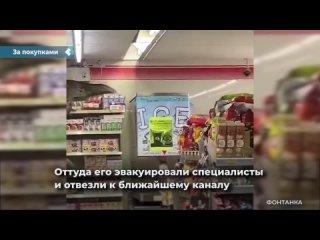 В Тайланде варан забрался в продуктовый магазин