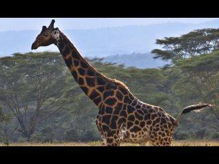 Самые редкие животные мира.
