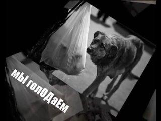 Бездомные животные (ЛЮДИ НЕ ОСТАВАЙТЕСЬ РАВНОДУШНЫМИ)
