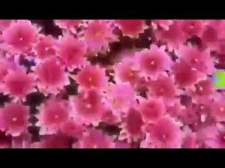 Video by Volshebnik Charodey
