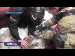 Из горящей квартиры в Подольске спасли кота и собаку. Новости ТВ Центр