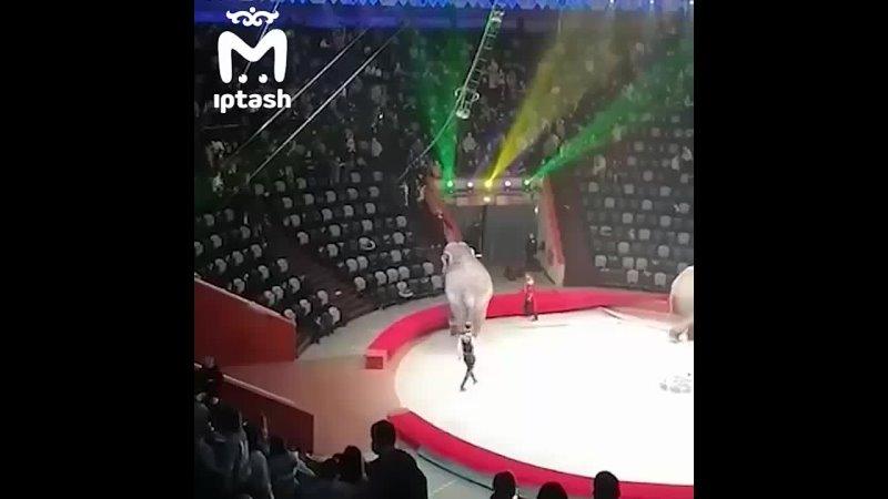 В казанском цирке во время шоу один слон напал на другого