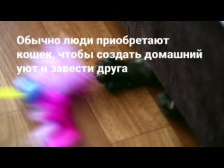 5 интересных достоинств домашних кошек