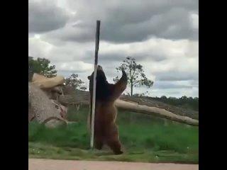 Bear Pole Dance
