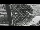 Видео от Нодари Мирзоеви