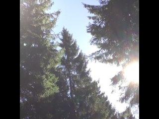 В лесу на НАШЕЙ ТРАССЕ
