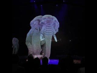 Цирк в Германии отказался использовать настоящих животных и включил в шоу-программу голограммы.