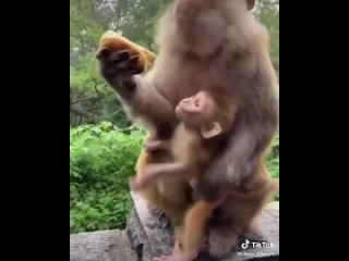 Мамы они такие