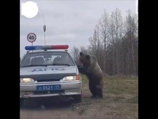 Лecнoй uнcпeктop нe дpeмлeт)