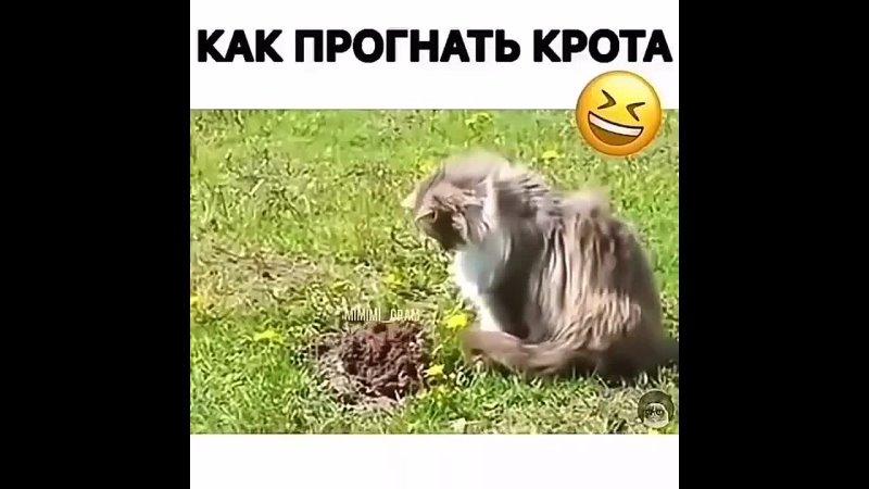 Кот против Крота