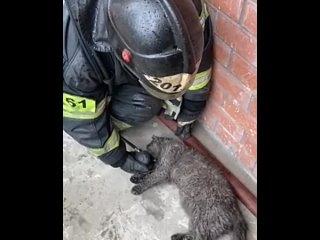 ДТП Москва - Спасение кота