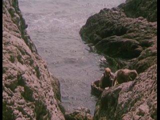 Остров сокровищ (2)