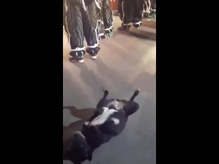 Собакен тоже в не остается в стороне от этой вечеринки
