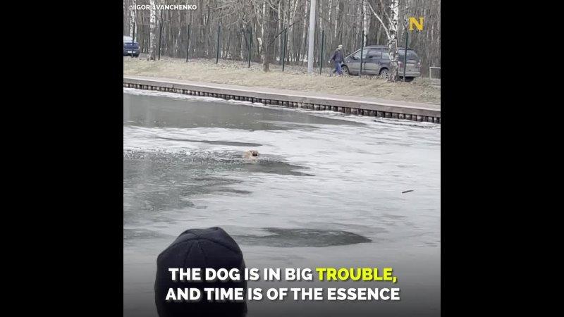 человек рискует собственной жизнью чтобы спасти тонущую собаку